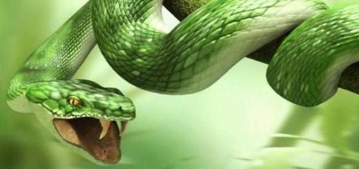 gjarperi