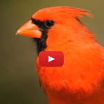 Mrekullitë në zogun tropikal.Kurani dhe shkenca