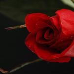 8 porosi Profetike se si duhet të sillesh me gruan tënde