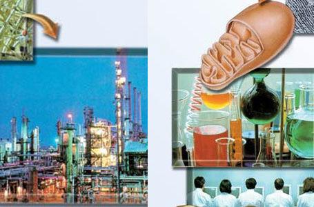 Rafineria e naftës në trupin tonë