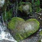Prej sëmundjeve më të rrezikshme të cilat e godasin robin është ashpërsia e zemrës.