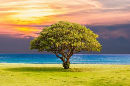 7 veprat e bukura që ka  urdhëruar profeti Muhamed alejhi selam