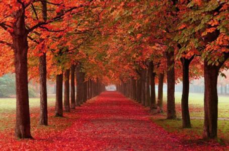 4 fjalet qe fshijne gjynahet si gjethet e pemes